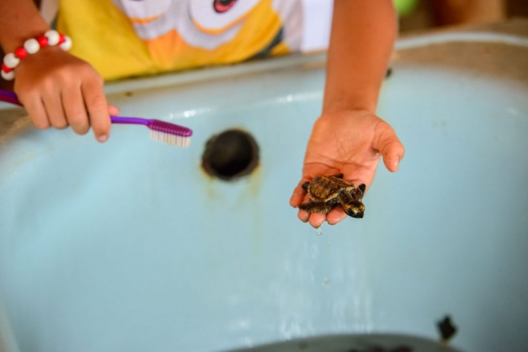 Sumatra Turtle Project