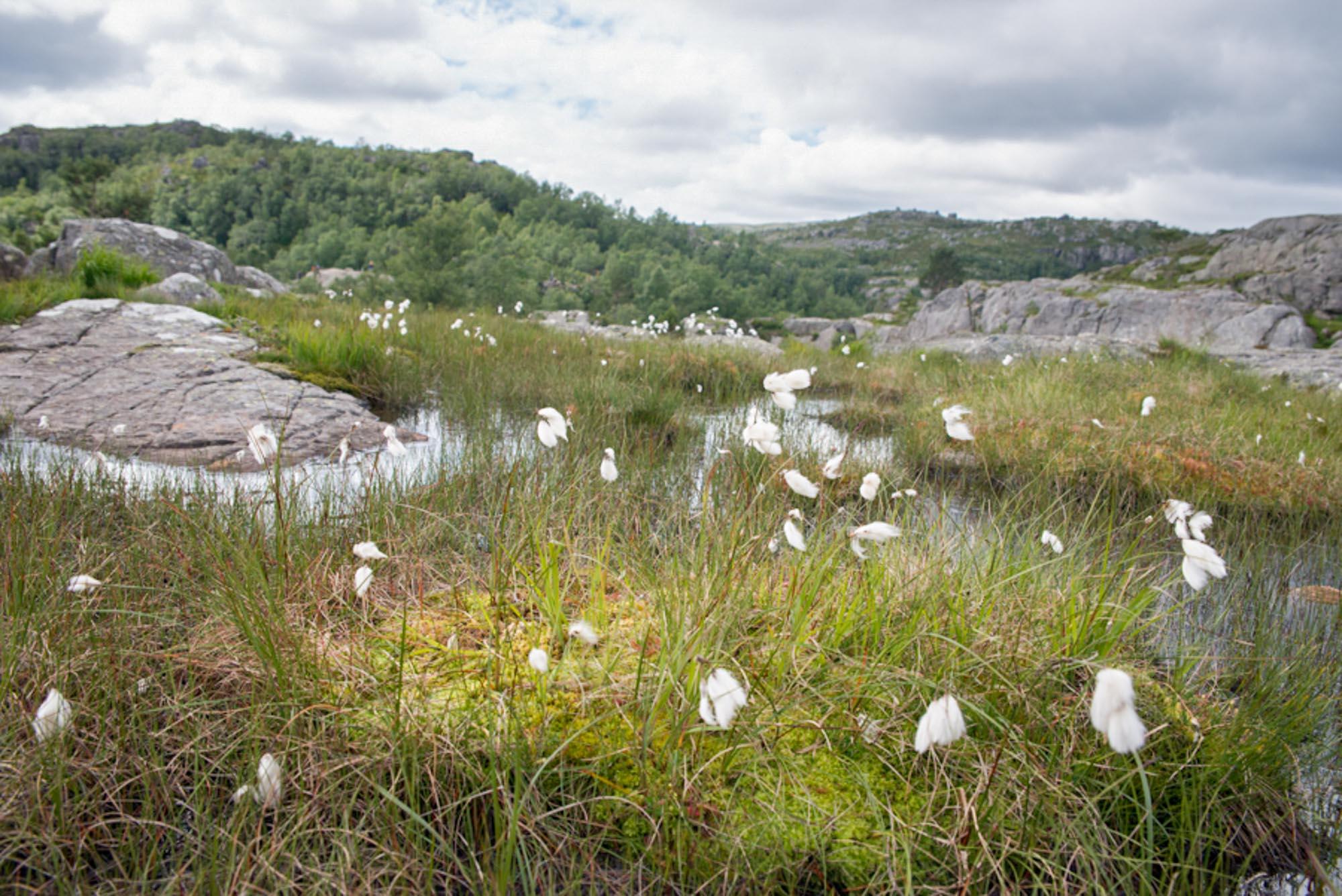 White flowers Pulpit Rock