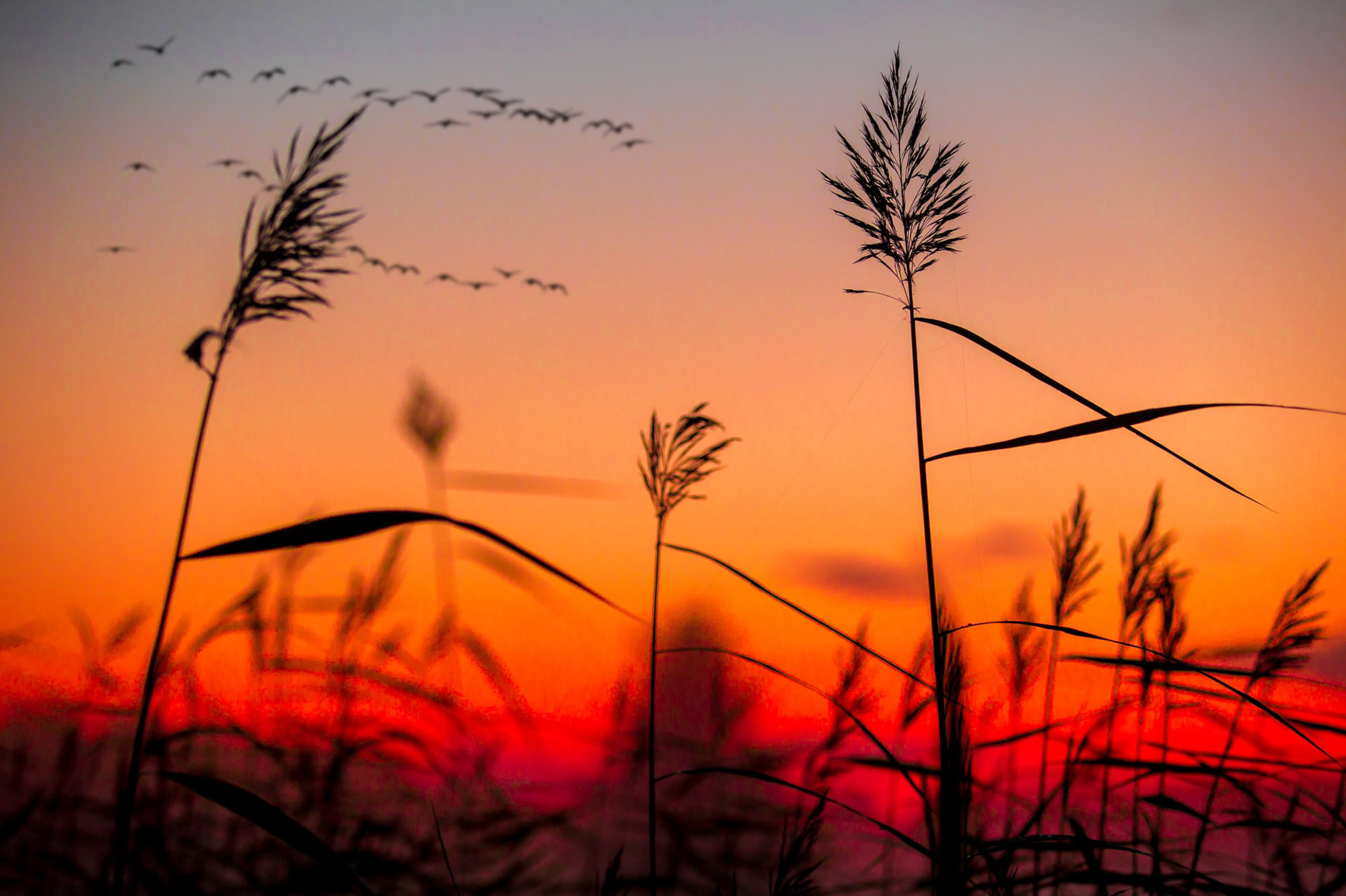 Finland-Sunset-2