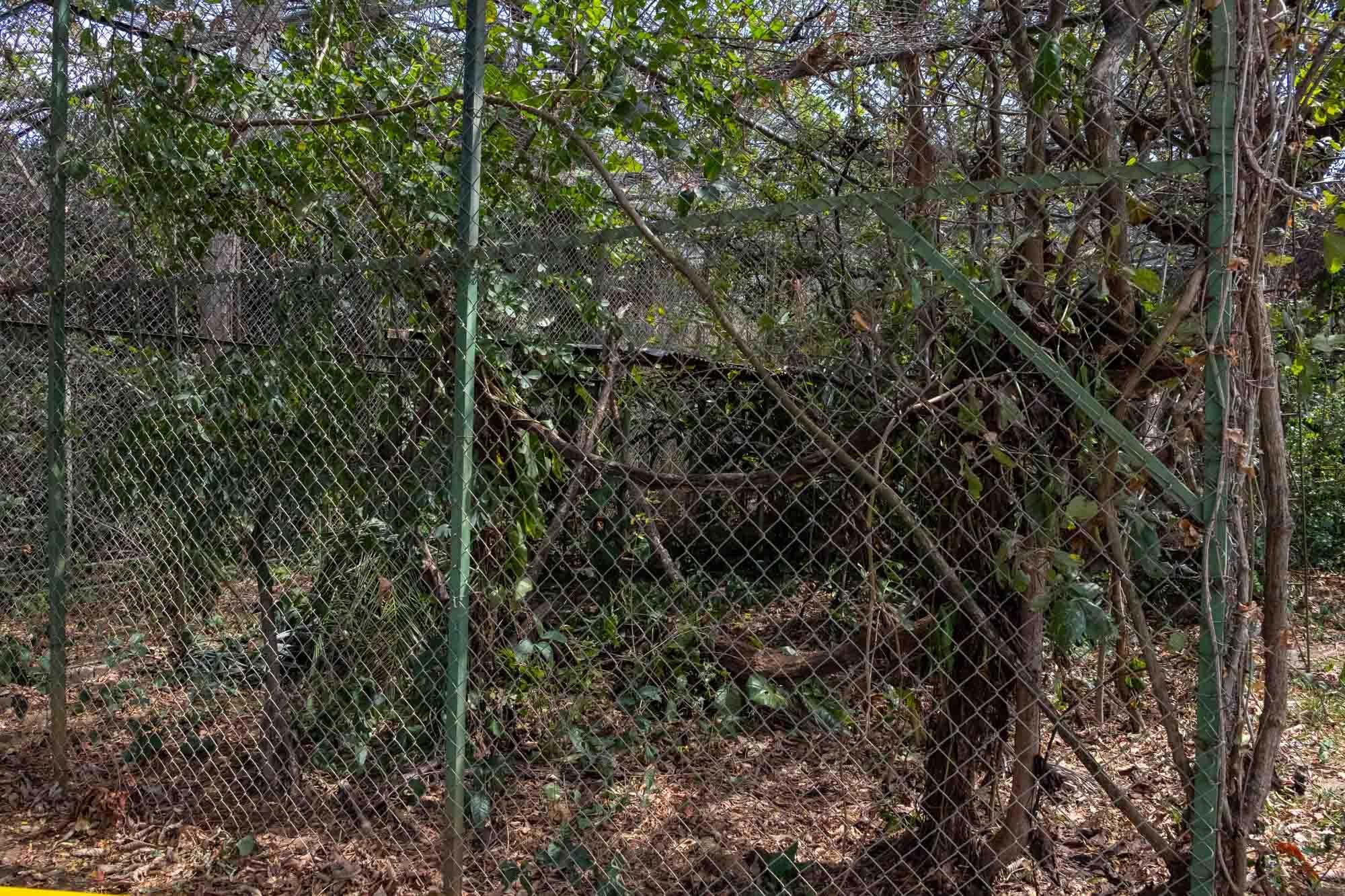 centro de rescate: las pumas