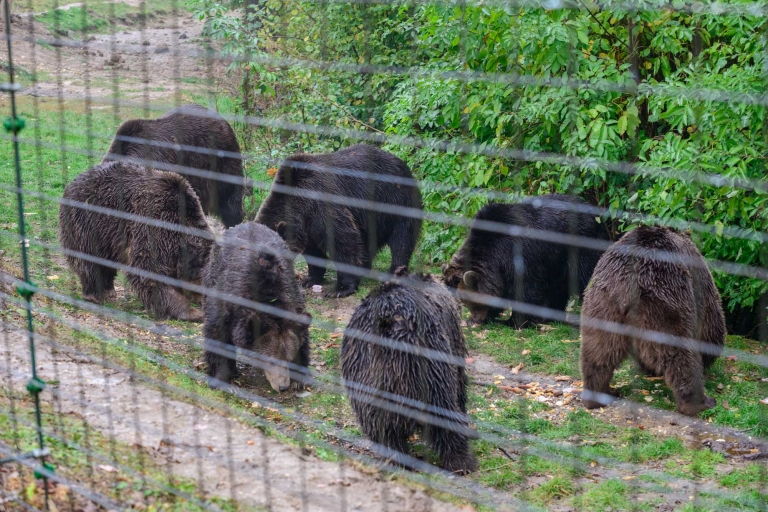 7 bears at the sanctuary being fed