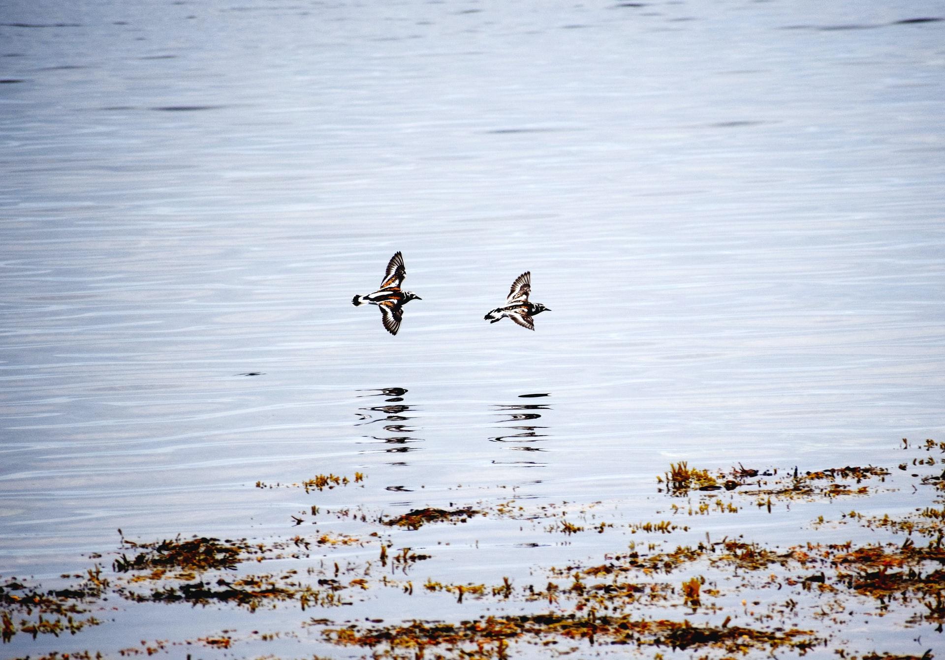 Yell Island, Shetland
