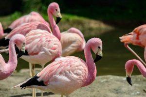Better Flamingos than Sardinia! A photo tour around Slimbridge Wetland Centre