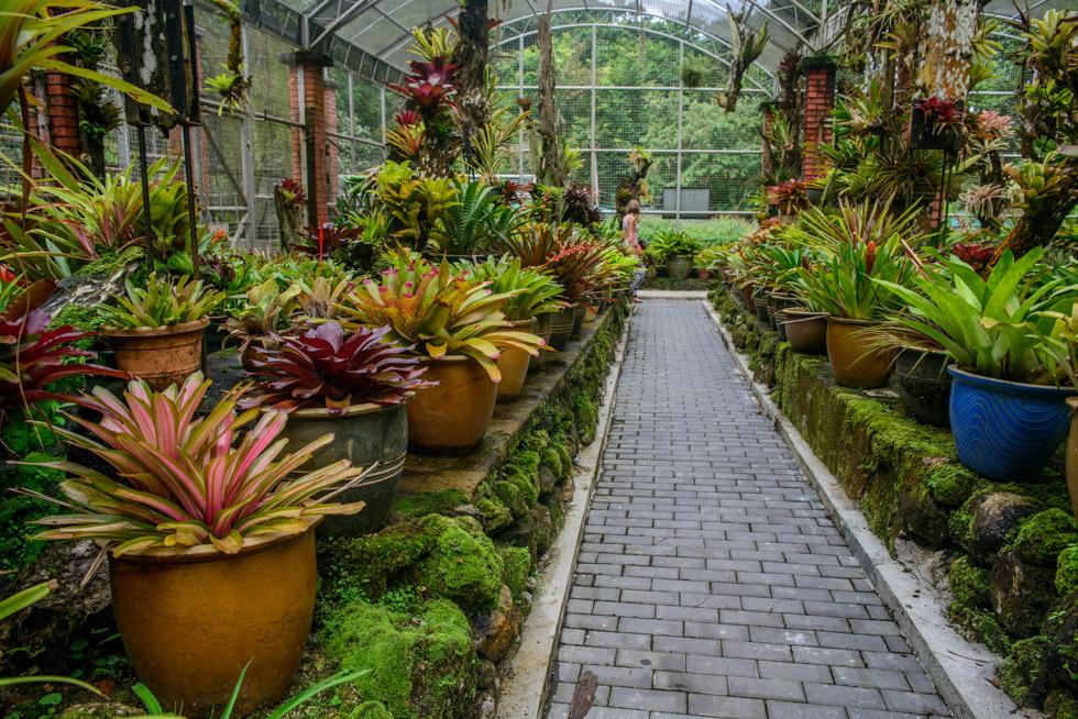 Penang Botanic