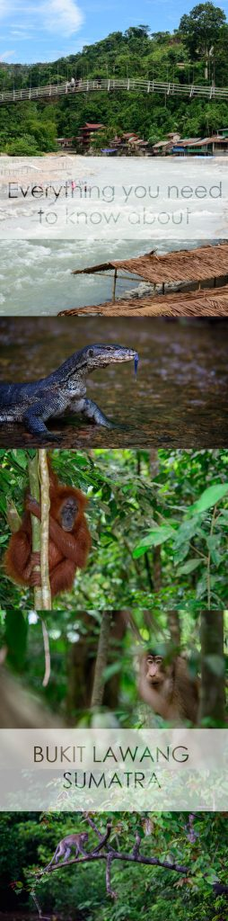 Everything you could possibly need to know about Bukit Lawang
