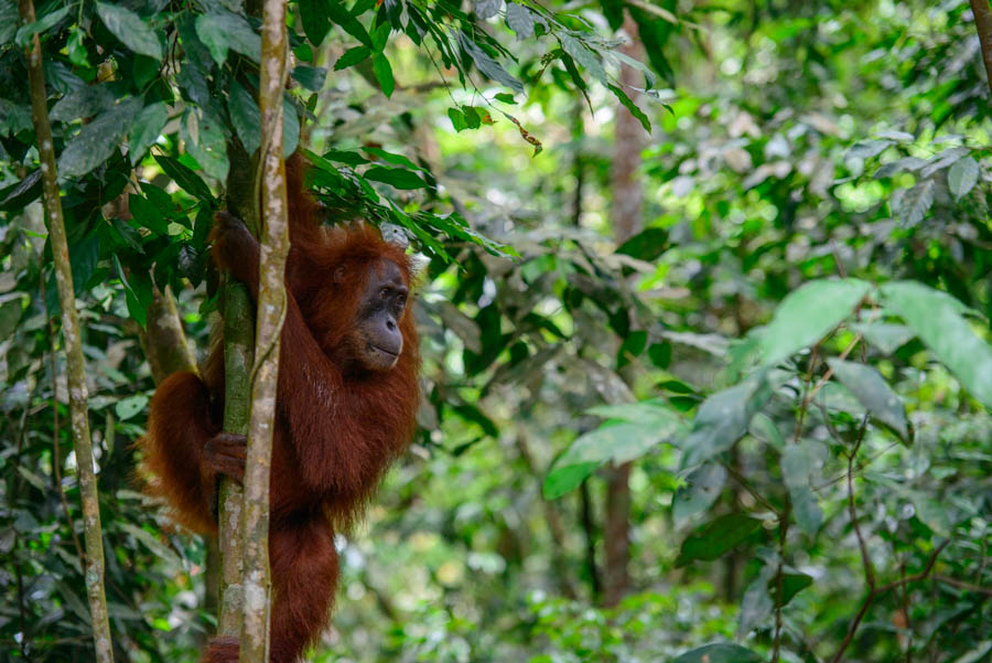 My Five Favourite Things to do in Bukit Lawang