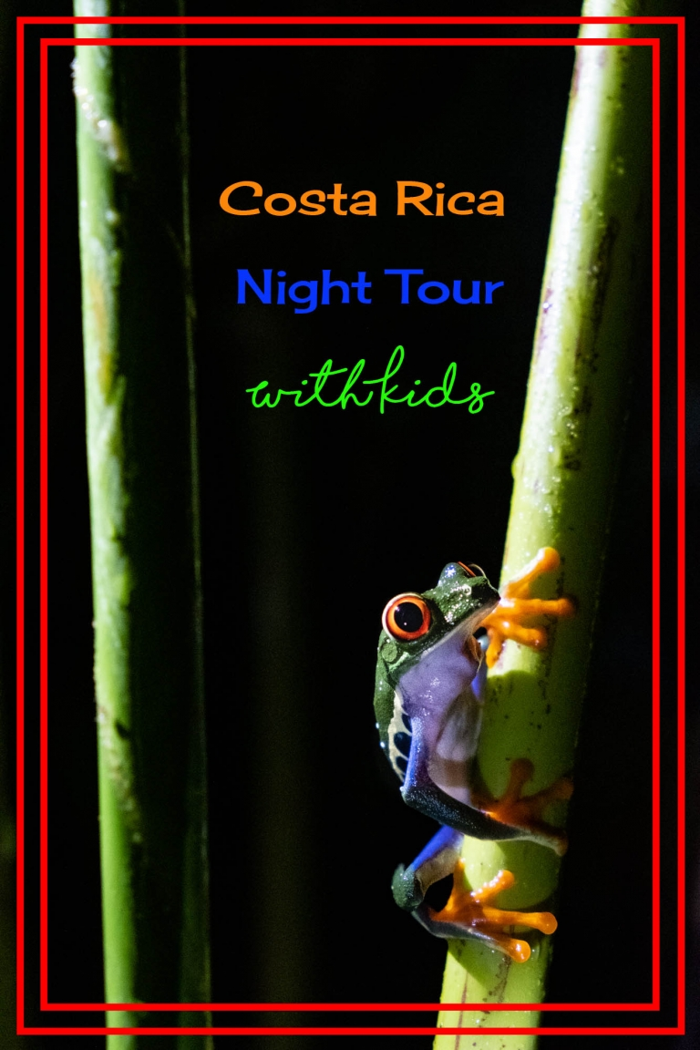 If you're considering a night tour with kids, read this post on why we think it's esentia;l.