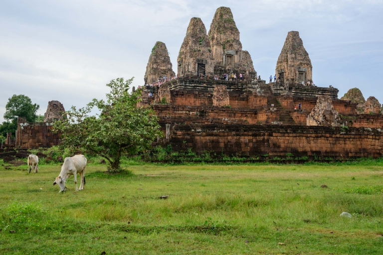 Whitee Cow Angkor Wat Temple
