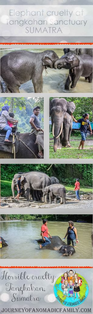 It breaks my heart to write this but the truth is we were conned and we supported atrocious cruelty to these majestic creatures that we adore. I am so upset and angry with myself that I fell for this. Tangkahan Elephant Sanctuary is NOT a sanctuary