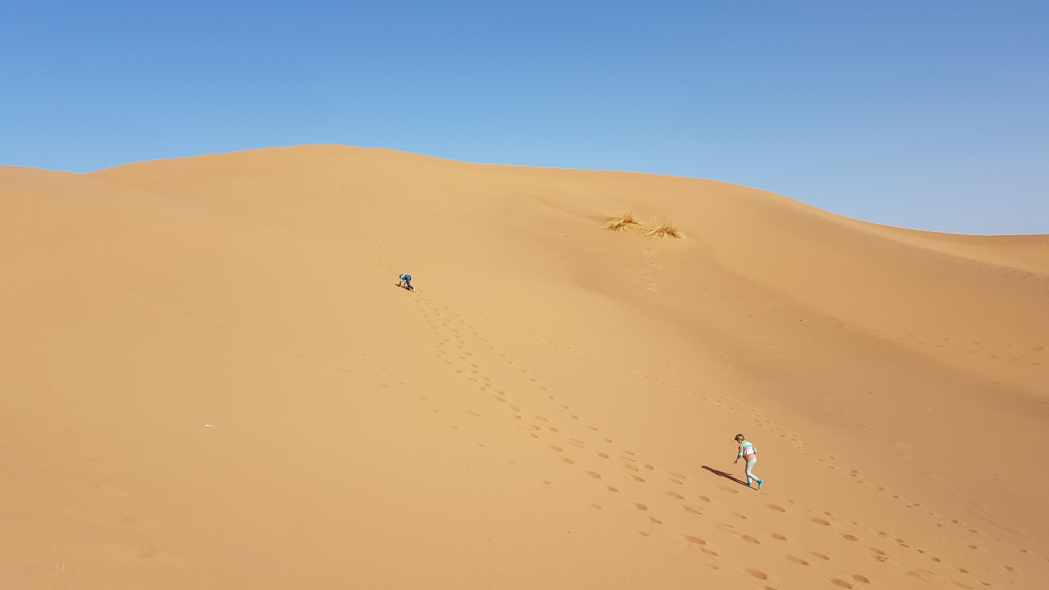 desert camel ride