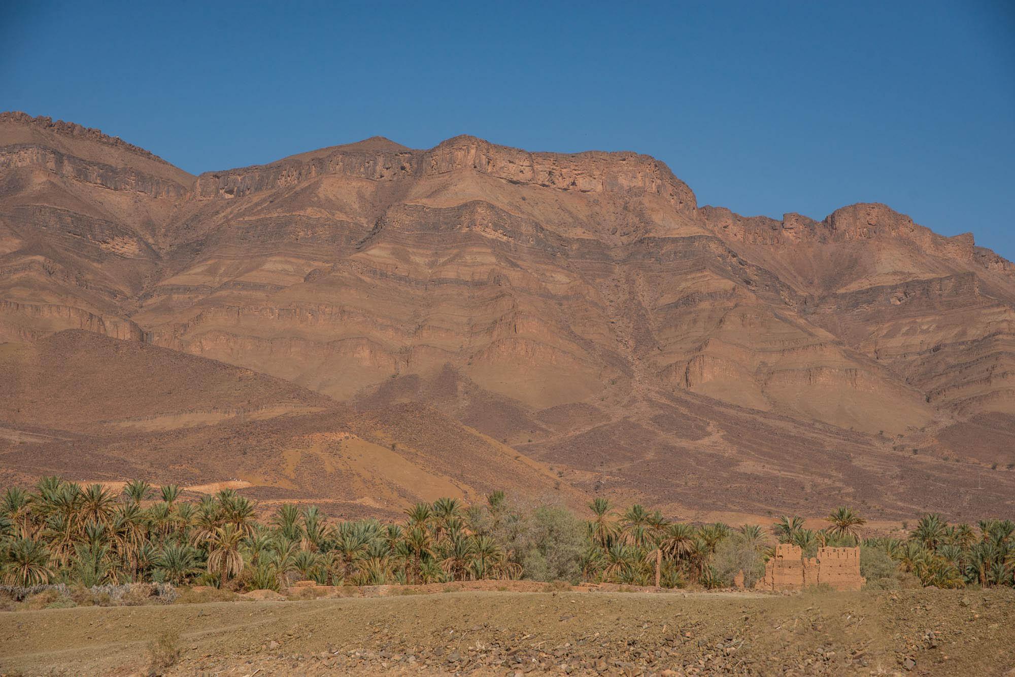 A desert camel ride