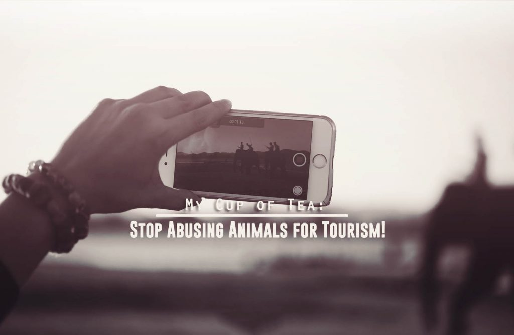 Avoiding animal cruelty whilst travelling