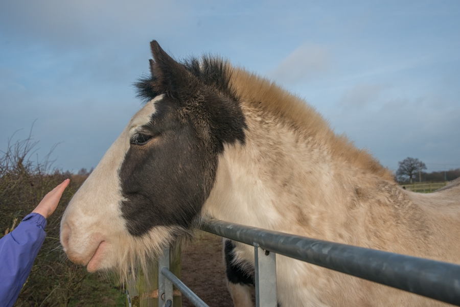 Supporting RedWings Horse Sanctuary, Norfolk