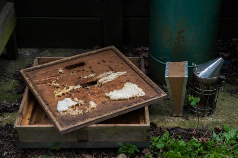 Urban Bees Airbnb Experience in Kings Cross